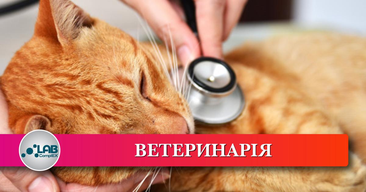 Ветеринарна Медицина